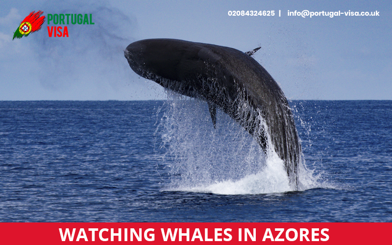 Watching-whales-in-Azores